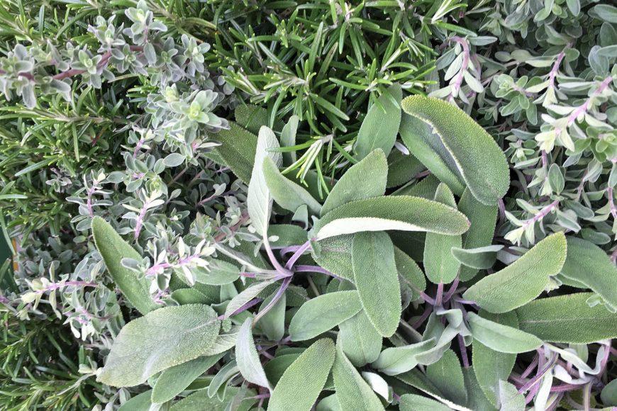 raritaetenboerse-botanischer-garten-wien