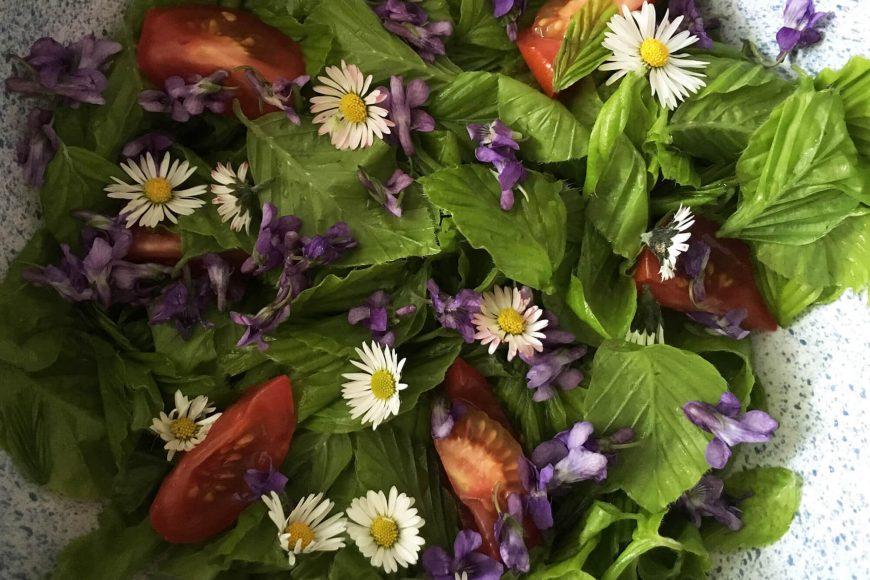 buchenblatt-salat-veilchen-gaensebluemchen