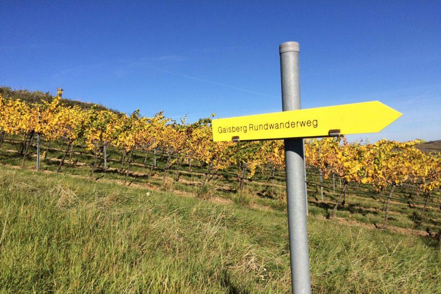 gaisberg-rundwanderweg-abhof-partner-weingut-dolle-allram-weinkontraste-wienerwald