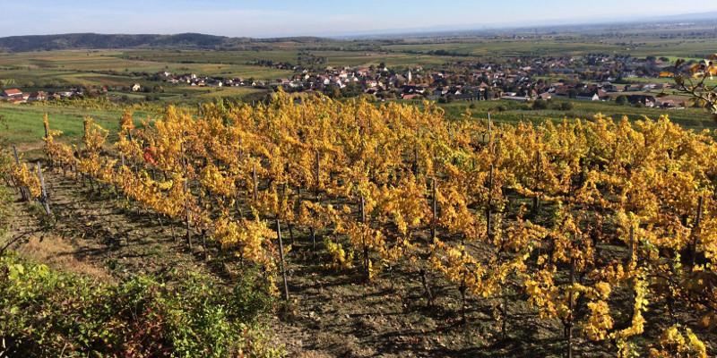Herbstliche Weitsicht vom Gaisberg Rundwanderweg auf das Winzerdorf Straß im Straßertal
