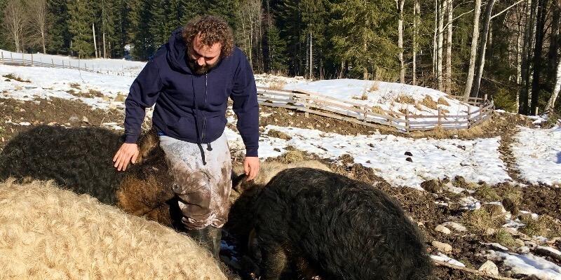 Bio Bauernhof Ziegerhofer St Kathrein am Hauenschlag Steiermark Bio Schwein Mangalitza