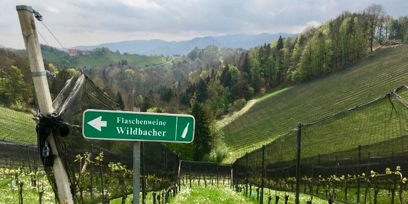 Weingut Sternat Eichberg Südsteiermark Steiermark Leutschach