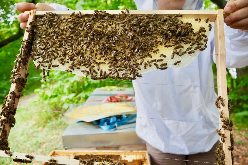 Wiener Bezirksimkerei Honig Bienen Imkerei AbHof Tour